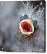 Baby Bird Acrylic Print