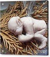Baby Fae Acrylic Print