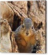 Baby Fox Squirrel Acrylic Print