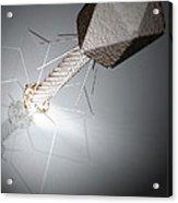 Bacteriophage Acrylic Print