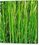 Bamboo Acrylic Print by Andres LaBrada