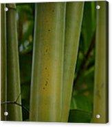 Bamboo II Acrylic Print
