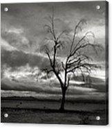 Bare Tree Acrylic Print