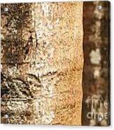 Bark Of A Tree Acrylic Print