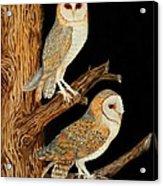 Barn Owl Duo Acrylic Print