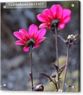 Be Strong Acrylic Print