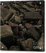 Beach Stones Acrylic Print