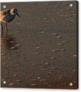 Beach Wildlife Acrylic Print