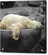 Bear On A Break Acrylic Print