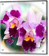 Beautiful Array Of Purple Butterfly Orchids Acrylic Print