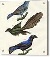Beautiful Foreign Birds Acrylic Print