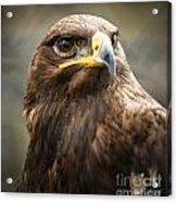 Beautiful Golden Eagle Portrait Acrylic Print