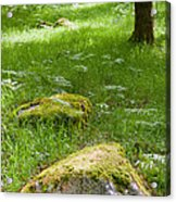 Beautiful Lush Vobrant Image Of Ancient Woodland Acrylic Print by Matthew Gibson