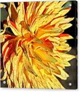 Beauty In The Sun Acrylic Print