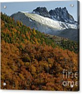 Beech Forest, Chile Acrylic Print