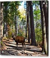 Big Buck Acrylic Print by Bob Jackson