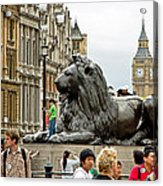 Big Lion Little Ben Acrylic Print