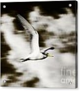 Bird Flying In The Clouds Acrylic Print