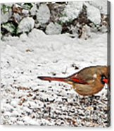 Bird In Winter Acrylic Print