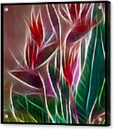 Bird Of Paradise Fractal Acrylic Print by Peter Piatt