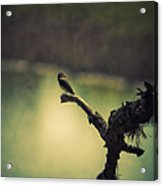 Bird Watching Acrylic Print