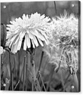 Birth Life Death Acrylic Print by Frozen in Time Fine Art Photography