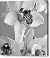 Black And White Beauty Acrylic Print