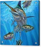 Black Marlin And Albacore Acrylic Print