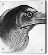 Blackburn Birds, 1895 Acrylic Print
