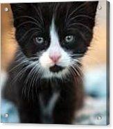 Black And White Kitten Acrylic Print