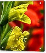 Blossom With Raindrops Acrylic Print
