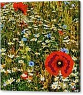 Blossoming Meadow Acrylic Print