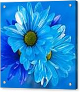 Blue Daisies In Vase Outdoors Acrylic Print