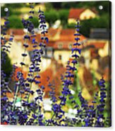 Blue Flowers And Rooftops In Sarlat Acrylic Print