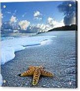 Blue Foam Starfish Acrylic Print