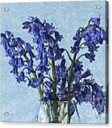 Bluebells 1 Acrylic Print