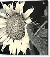 Blumen Acrylic Print