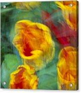 Blurred Tulips Acrylic Print
