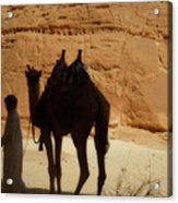 Bou Bou Camel With Beduin Owner  Acrylic Print
