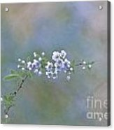 Breath Of Spring Acrylic Print