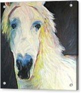 Bright Eyed Bailey Acrylic Print