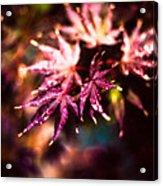 Bright Leaves Acrylic Print