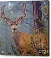 Buck Deer In A Mystical Foggy Forest Scene Acrylic Print