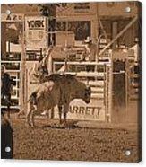 Bull Rider Acrylic Print