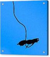Bungee Jumper Against Blue Sky Acrylic Print