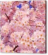 Bursting With Blossoms Acrylic Print