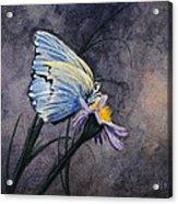 Butterfly Acrylic Print by Bob Hallmark