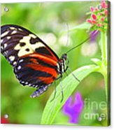 Butterfly On Bush Acrylic Print