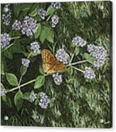 Butterfly On Oregano Acrylic Print