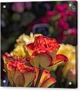 Buy Me A Rose Acrylic Print